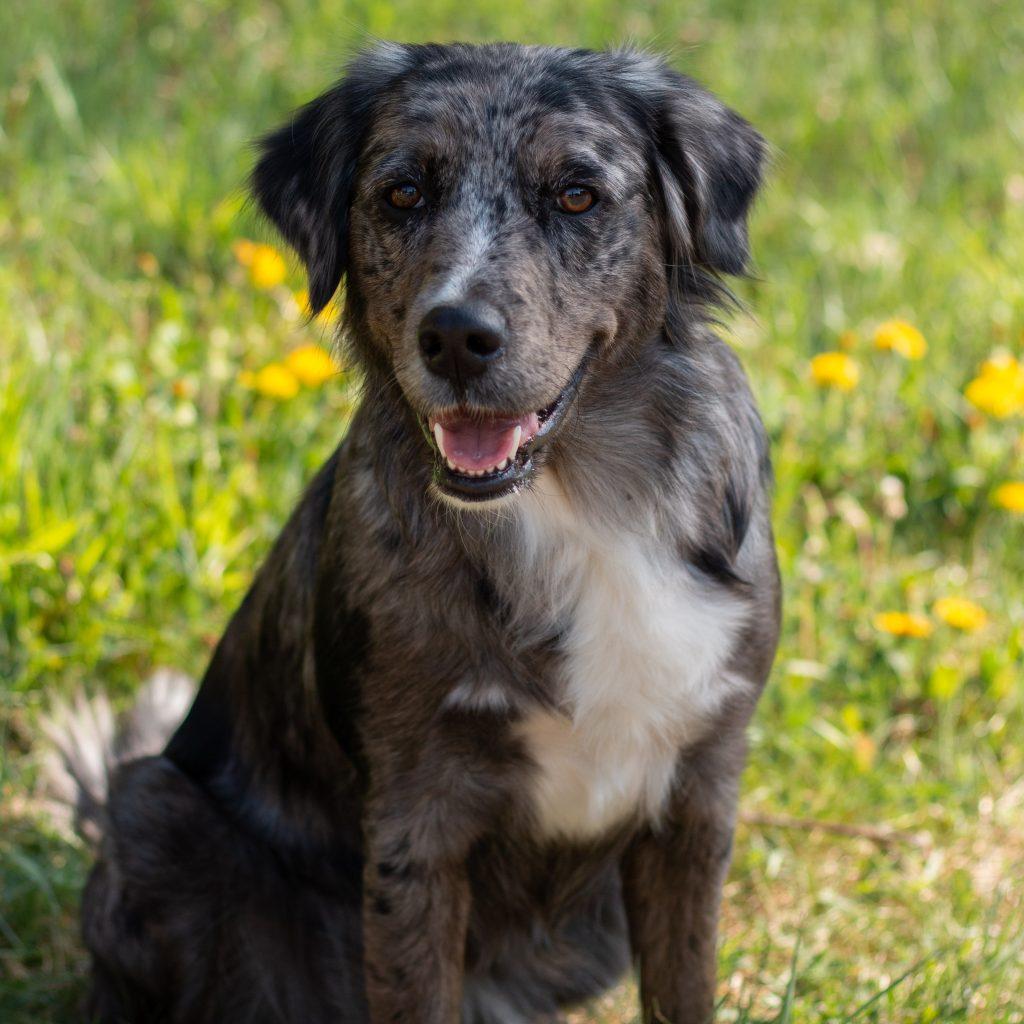 Luna unser Hund